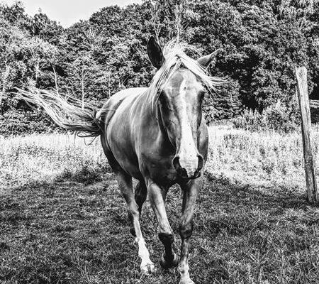 horse_smsm